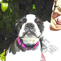 Adopt A Pet :: Priscilla - San Francisco, CA