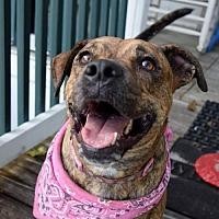 Adopt A Pet :: JASMINE - EMOTIONAL SUPPORT ANIMAL *NEEDS FOSTER* - DeLand, FL