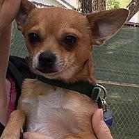 Adopt A Pet :: Junior - Studio City, CA