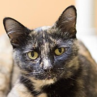 Adopt A Pet :: Cleopatra - Fargo, ND
