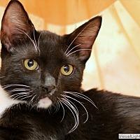 Adopt A Pet :: Henry - Westchester, CA
