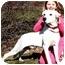 Photo 3 - Dalmatian/Labrador Retriever Mix Dog for adoption in Pawling, New York - PEBBLES