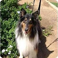 Adopt A Pet :: Blackjack - Trabuco Canyon, CA