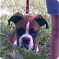 Adopt A Pet :: Jerry - Thomasville, GA