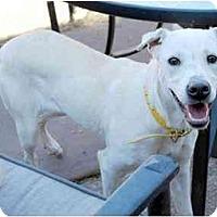 Adopt A Pet :: Dallas - Emory, TX