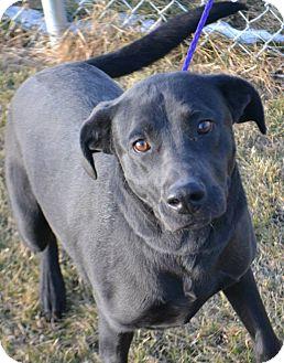Labrador Retriever Mix Dog for adoption in Fruit Heights, Utah - Jet
