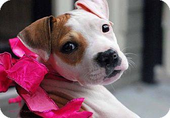 Terrier (Unknown Type, Medium) Mix Puppy for adoption in Baton Rouge, Louisiana - Trixie