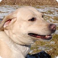 Adopt A Pet :: Meadow - Cincinnati, OH