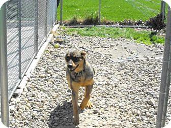 Shepherd (Unknown Type)/Rottweiler Mix Dog for adoption in Napoleon, Ohio - Dixie
