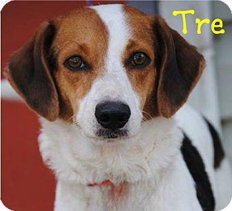 Hound (Unknown Type) Mix Dog for adoption in Covington, Louisiana - Tre