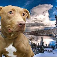 Adopt A Pet :: MAGGIE - Fairfield, CA