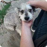 Adopt A Pet :: Charlie - Marrero, LA