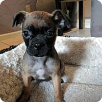 Adopt A Pet :: Palms - Austin, TX