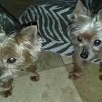 Adopt A Pet :: Tigger & Trouble (FL) - Largo, FL
