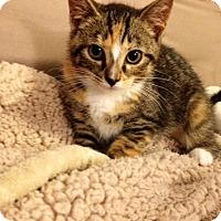 Adopt A Pet :: Ember (Ash and Flame's sister)(LD) - Trenton, NJ