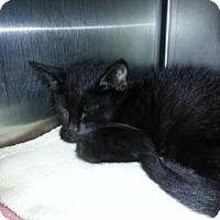 Adopt A Pet :: Derrick (Petsmart FH) - Trenton, NJ