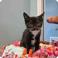 Adopt A Pet :: DANTE - Santa Clara, CA