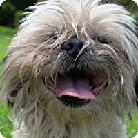 Adopt A Pet :: JENNI - West Palm Beach, FL