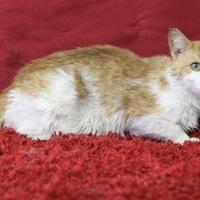 Adopt A Pet :: Poland - Blackwood, NJ