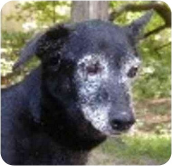 Retriever (Unknown Type) Mix Dog for adoption in Eatontown, New Jersey - Sophie