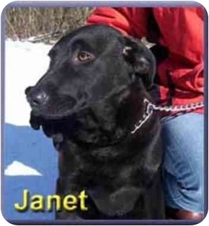 Retriever (Unknown Type)/Basenji Mix Dog for adoption in Aldie, Virginia - Janet
