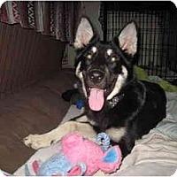 Adopt A Pet :: Butch - Green Cove Springs, FL