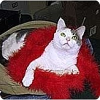 Adopt A Pet :: Pasha - Alexandria, VA