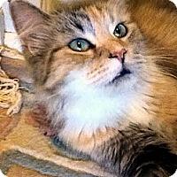 Adopt A Pet :: Priscilla - Alexandria, VA