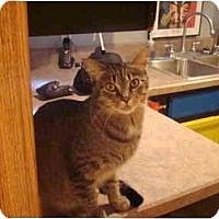 Adopt A Pet :: Foofie - Muncie, IN