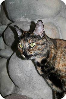 Domestic Shorthair Cat for adoption in Richland, Michigan - Peanut