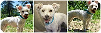 Terrier (Unknown Type, Small) Mix Dog for adoption in Forked River, New Jersey - Zoe