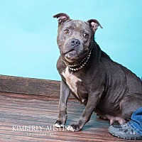 Staffordshire Bull Terrier Mix Dog for adoption in benson, North Carolina - Pearl