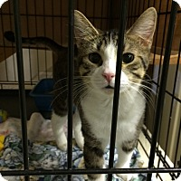 Adopt A Pet :: Giovanni - Byron Center, MI