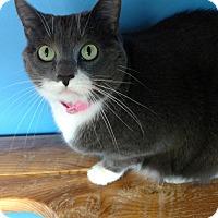 Adopt A Pet :: Kloe - Brookings, SD