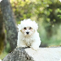 Adopt A Pet :: Junior - Auburn, CA