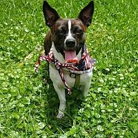 Adopt A Pet :: Boudreaux - Baton Rouge, LA