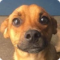 Adopt A Pet :: Thompson - Springdale, AR