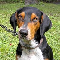 Adopt A Pet :: Jane Marple - Atlanta, GA