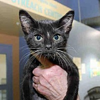 Adopt A Pet :: CHARLOTTE - Pittsburgh, PA