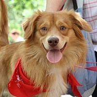 Adopt A Pet :: Cooper - Rockville, MD