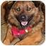 Photo 4 - Keeshond Mix Dog for adoption in Racine, Wisconsin - Bismark