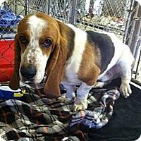 Adopt A Pet :: Noodle - Acton, CA