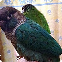 Adopt A Pet :: Marty - Lenexa, KS