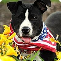 Adopt A Pet :: Athena - Vernon Hills, IL