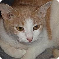 Adopt A Pet :: Basil - Jersey City, NJ