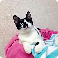 Adopt A Pet :: Barley - Foothill Ranch, CA
