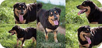 Shepherd (Unknown Type) Mix Dog for adoption in Lyndhurst, New Jersey - Maya