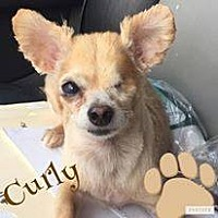 Adopt A Pet :: Curly - Snyder, TX