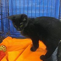 Adopt A Pet :: Star - Idaho Falls, ID
