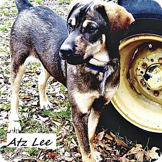 Hound (Unknown Type) Mix Dog for adoption in East Hartford, Connecticut - Atz Lee in CT